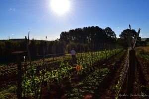 Agricultura Ecológica.