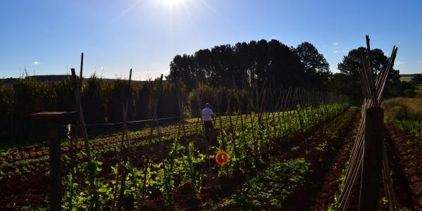 Agricultura ecológica: una gran elección